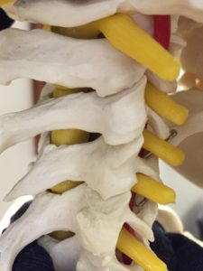 Chiropractic treatment, Vit D, Calcium after SCI
